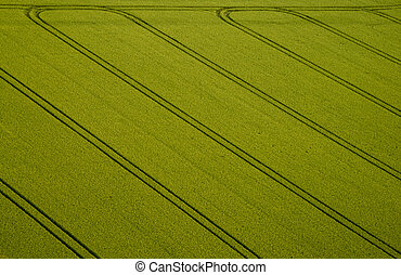 Cornfield, Aerial Photo - Aerial Photo of a cornfield