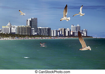 South Beach, Miami - Seagulls flying over the ocean at Miami...