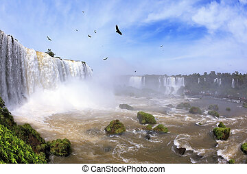 Waterfalls and birds in Brazil. Black Andean condors fly...