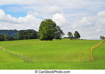 Lovely green lawns - France, Haute Savoie Lovely green lawns...