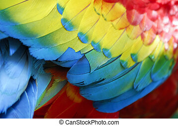 Scarlet Macaw Feathers - A close-up details of scarlet macaw...