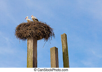 Two storks in their nest on a pole