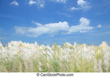 青, 花, 空, フィールド, 背景, 草