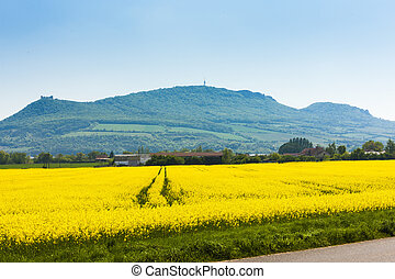 Palava with rape field, Czech Republic