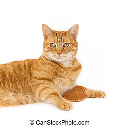 Ginger cat and a Dutch stroopwafel - Square image, isolated...