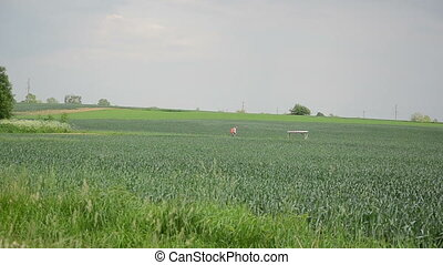 field rye farmer - big field of rye farmer spraying crops...