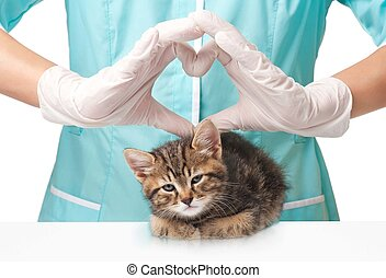 Care of pets - Small lovely kitten on survey at the...