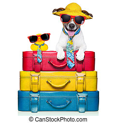 dog on vacation - dog traveling with yellow plastic duck on...