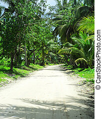 Road in tropical jungle