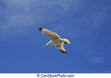 fly - young flying seagull and the blue sky