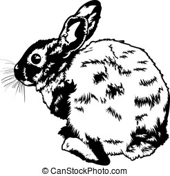 Wild Rabbit - Black and white vector illustration of a wild...