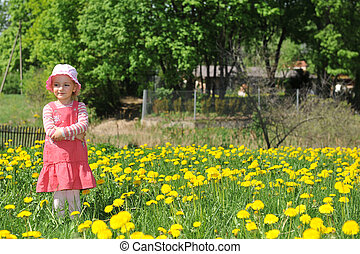 field blossoming dandelions - little girl in straw hat walks...