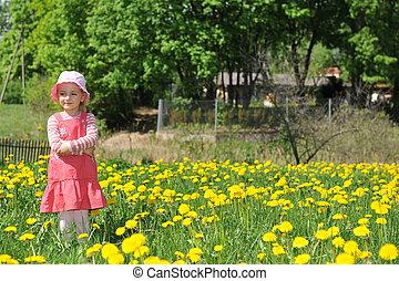 field blossoming dandelions - little girl in straw hat walks...