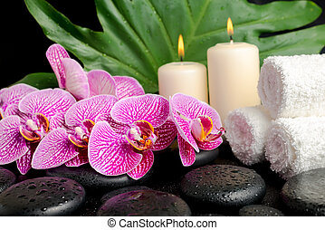spa setting of twig stripped violet orchid (phalaenopsis ),...