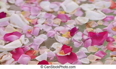 Petals on water - Floating on water glowing rose petals