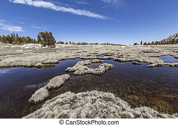 Alpine Tundra - Alpine ponds and grassy tundra above 11,000...