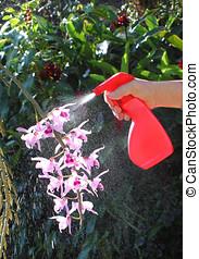 spraying pesticide - close-up of hand holding a pesticide...