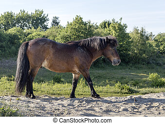 wild brown horse free in nature
