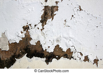 Fungus and Flaking Paint due to Rising Damp - fungus and...