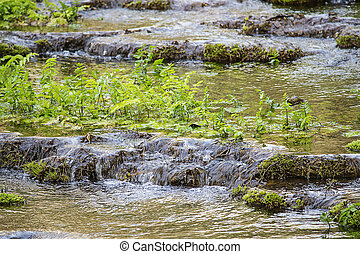 Forest stream in spring time with fresh grass.