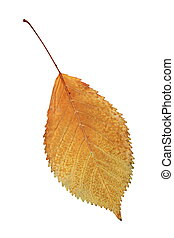 秋, シンボル, 葉, 金
