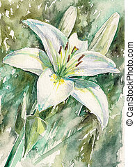 White lily flower in garden.Picture created with...