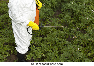 pesticide spraying - vegetables spraying with pesticides in...