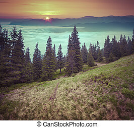 Foggy sunrise in the mountains.