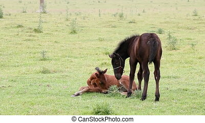 brown and black foal on field