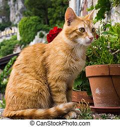 Cat portrait .