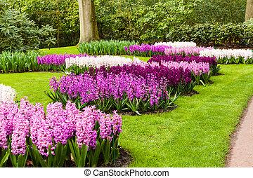 primavera, jacintos, jardín, paisaje