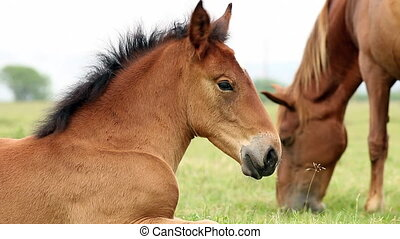 foal on field close up