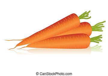 carrots - Illustration of carrots