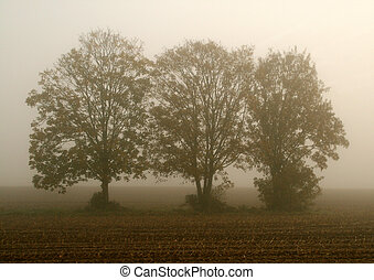 trees in the fog on a field in the morning