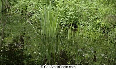 A yellow iris grass