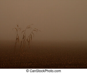 Corn in Fog - trees in the fog on a field in the morning