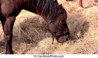 A brown horse munching some grasses