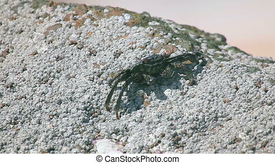 Crabs on the rock covered with sand.