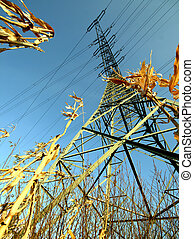 stream mast in a field of corn with blue sky