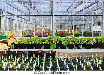 Greenhouse Interior - Interior of a greenhouse with...