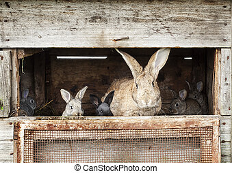 Mother rabbit with newborn bunnies  in cage