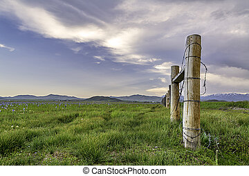 Field of flowers with a barbed wire fence