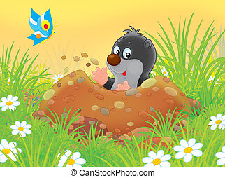 Mole - Funny little mole digging a burrow among grass on a...