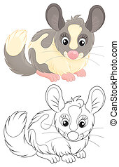 Chinchilla - Funny fluffy chinchilla, color and...