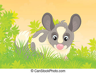 Chinchilla - Funny fluffy chinchilla sitting in green grass
