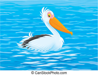 Pelican - White pelican swimming in blue water