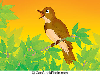 nightingale - Singing nightingale perched on a branch of a...