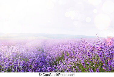 Flower field and sky. - Flower field and blue sky with...
