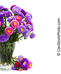 aster flowers - fresh aster flowers bouquet in vase close up...