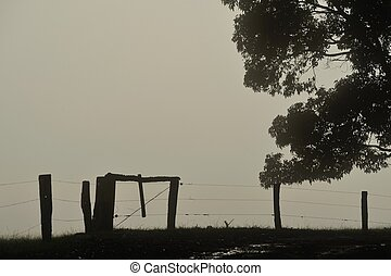 Fenced in Fog - Farm fence and gum tree in dense fog
